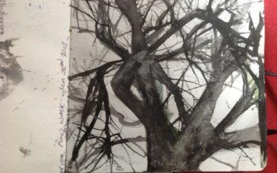 Tree on Pine Walk